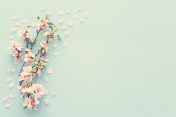 photo of spring white cherry blossom tree on pastel blue wooden background. View from above, flat lay Wall mural
