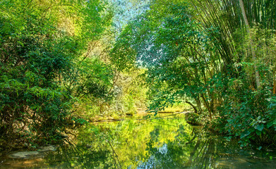 Canal through the forest : Thailand