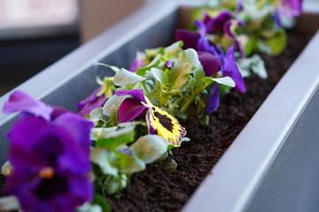 Wall Murals Flower shop Lente viooltjes bloemen planten