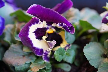 Photo on textile frame Flower shop Lente viooltjes bloemen planten