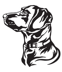 Decorative portrait of Dog Labrador Retriever vector illustration