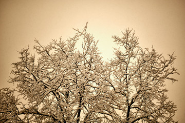 Branches in the snow against the sky in February