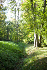 forest, path, tree, nature, trees, green, landscape, park, summer, wood, woods, road, spring, foliage, outdoor, trail, grass, leaves, footpath, light, autumn, environment, leaf, sun, natural