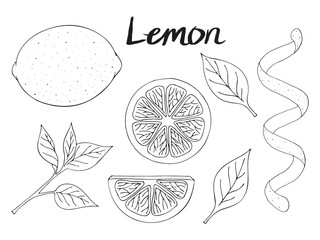 Collection of hand drawn elements, lemon, leaves and slice. Objects for packaging, advertisements. Black and white. Isolated image. Vector illustration.