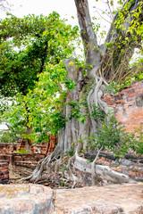Wat Mahathat Temple in Ayutthaya, Thailand