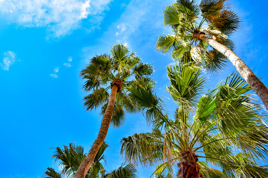 St. Pete Beach, Florida. January 25, 2019. Top view of palm trees on lightblue sky background in St. Pete Beach