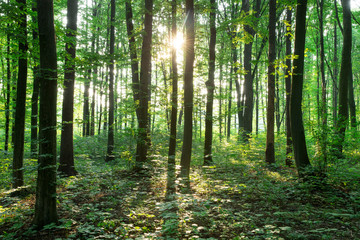 green Forest trees. nature green wood sunlight backgrounds