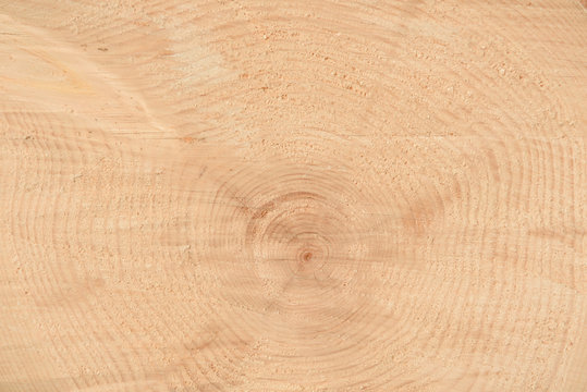 The texture of the end of the tree. Saw cut wood close up. Rough-wood on floors. Wood background.