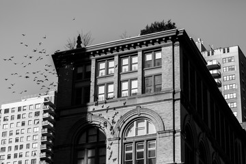 Pigeons on the architectures backgrounds in Manhattan