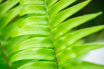 Macro plants. Florida. USA.