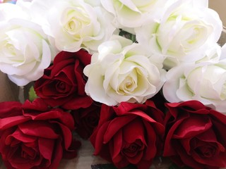 red and white rose Love Valentine Day