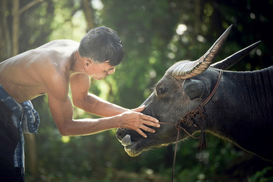 Farmer with buffalo look at the eyes / Asia man farmer give love for his buffalo water in field countryside