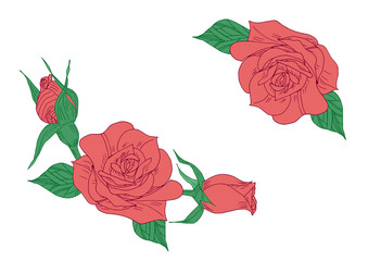 Red rose with green leaves hand drawn vector illustration