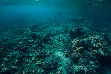 Tranquil underwater scene with corals in tropical sea