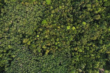 Aerial view of tropical green forest