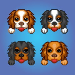 Cute dogs cavalier king charles spaniel heads pixel art illustration
