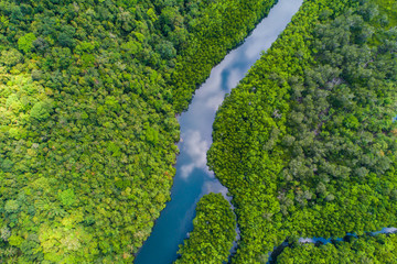 Tropical rain forest mangrove river and green tree on island