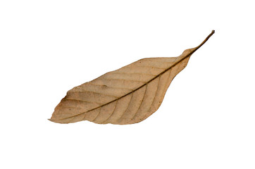 Brown dry leaves with white patterned background