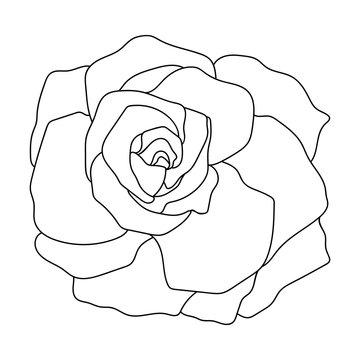 Vector line art of rose. Black isolated on white.