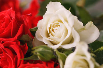Bouquet of fresh red and white roses,