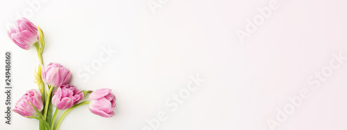Pink tulips on white background with copy space. Top view, banner for website.