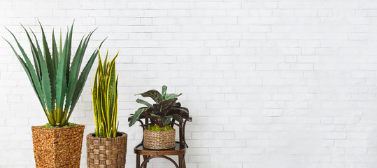 Houseplants and the chair over brick wall