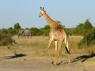 Botswana Safari Africa