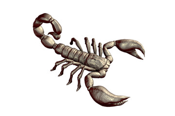 Scorpion isolated on white background, realistic 3D illustration
