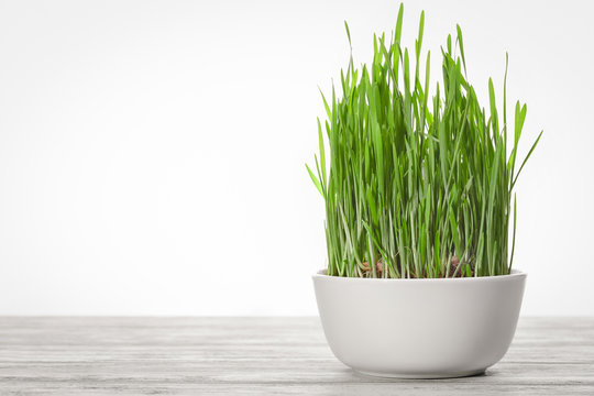 Concept of healthy eating. Green wheat sprouts in white cup.