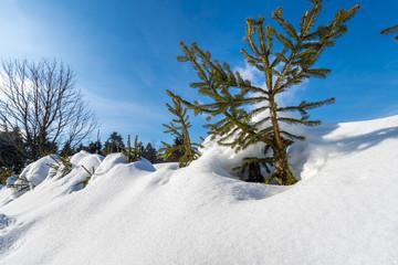 Winterlandschaft Bayerischer Wald - St. Englmar - Pröller