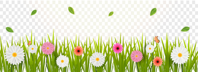Gerbera daisy flowers decorated transparent background for Hello Spring concept.