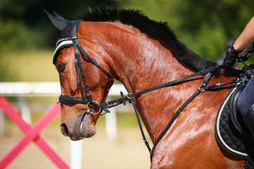 Horse in head portrait, photographed from the side in motion in jumping training..