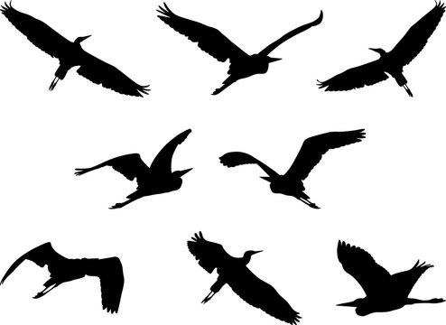 flying heron, set of birds silhouettes