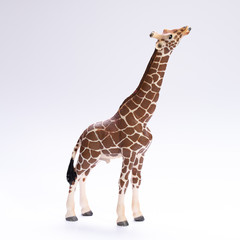 Giraffe with a long neck isolated on white background