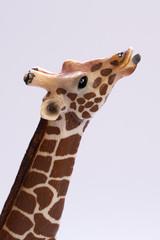 Close up of giraffe muzzle isolated on white background