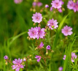 Beautiful purple flowers in nature