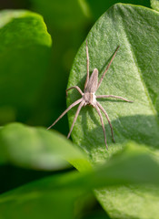 Spider on a green leaf of a plant