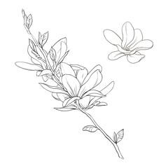 magnolia linear pattern