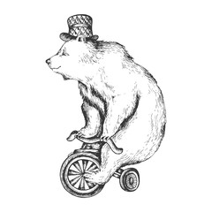 Circus bear on bicycle sketch engraving vector illustration. Scratch board style imitation. Hand drawn image.
