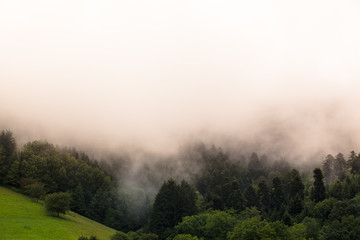 Forest Landscape at the Clouds / Trees of Black Forest (Germany) at morning fog, big white cloud copy space background