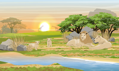 A family of lions resting near a lake in the African savannah. Wildlife of Africa. Acacia trees, stones, dry grass. Realistic Vector landscape