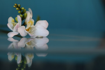 White freesia flowers on the table with a beautiful background for the holiday