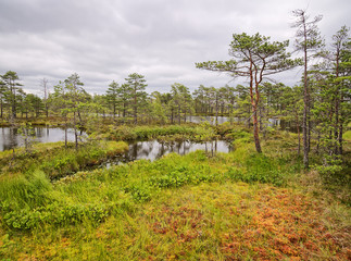 Rannametsa–Tolkuse nature study trail. Scenic swamp view with a small pond and wetland. Estonia.