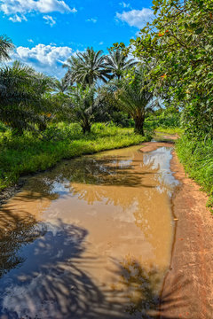 Typical unpaved rough rain-flooded road in woodland in Guinea, West Africa.