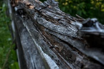 Tronco di legno