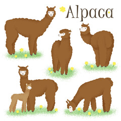 A set of alpacas with brown hair
