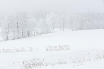 Winterlandschaft im Nebel in Bayern, Deutschland