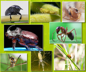 Collage of macro photos of insects