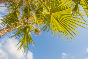 Perspective view of palm trees