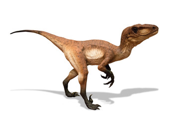 Velociraptor isolated on white background
